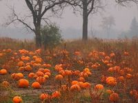 all things Fall...color, warmth & harvest