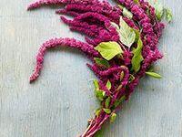 86 Best Amaranthus Wedding Flowers Images On Pinterest