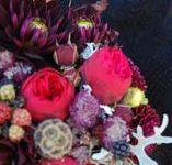burgundy palette / FLORA botanical atelier