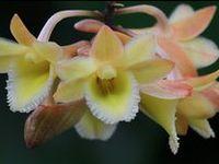 Wij speuren wekelijks het World Wide Web af voor de mooiste orchideeën-foto's. Bestaat er een mooiere plant op de wereld? Wat een diversiteit! Prachtig. Happy pinning!