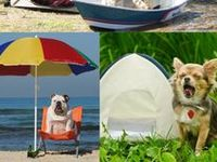 Pets and RV Travel