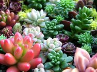 Succulents, flowers, herbs, and bliss
