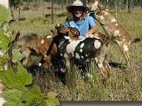 Photos of goats from Australia and the world  #goatvet see hints on this webpage to get similar healthy kids http://www.goatvetoz.com.au