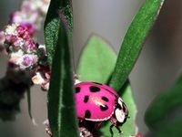 It is thought that ladybugs are a good omen and can symbolize good luck in love, money or possibly grant a wish!