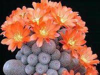 Cactus & Suculentas & Bonsai