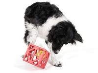 Border Collies, pet supplies, dog stuff