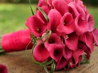 My love of Calla Lilies and other beautiful flowers