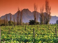 Cape Town | Cape Winelands