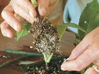 ❦ Coltivare Ortaggi • Fiori • Piante • Funghi
