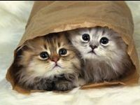 Pics of all kinds of cats from babies to the large ones like the lion or tiger. Enjoy. They are a lot of fun.
