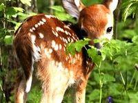 Deer*dream.