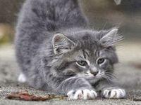 I luv beautiful kitties!!!