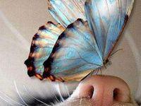 Butterflies & Moths & Dragonflies
