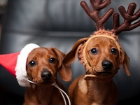 """""""Whoever said you can't buy happiness forgot little puppies"""". ~Gene Hill #dogs #pets"""