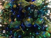 Various Beautiful Christmas Trees