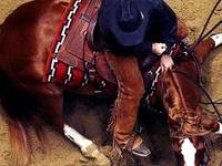 Equine(: