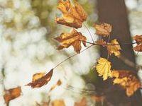 | fall |