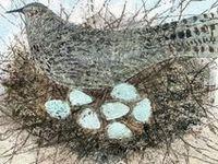 Art I Love Birds, Feathers & Nests