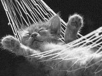 I love animals :)
