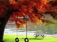 """""""The autumn leaves have got you thinking about the first time that you fell""""....  Don Henley"""