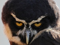 Love my Owls