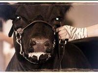 Livestock <3