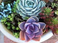 great ideas for my gardens