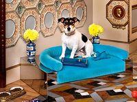 Life + Pets + Design