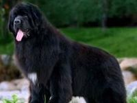 """""""A man is not a good man to me because he will feed me if I should be starving, or warm me if I should be freezing, or pull me out of a ditch if I should ever fall into one. I can find you a Newfoundland dog that will do as much."""" –Henry David Thoreau, Walden"""