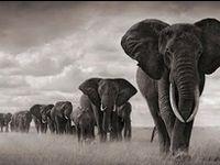 Love will draw an elephant through a key-hole. ~ Samuel Richardson