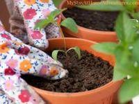 Gardening for Newbies / Gardening For Newbies, Flower Gardening For Beginners, Tips For Gardening At Home, Container Gardening For Beginners, Gardening Tips For Beginners, Raised Bed Vegetable Gardening For Beginners, Garden Tips And Tricks, Vegetable Gardening Tips, Gardening Tips And Tricks For Beginners