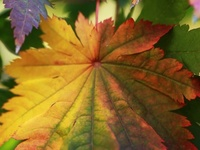 Fall into Autumn