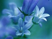 草花には詳しくありません。でも地球随一美を授かった生命なんですね。