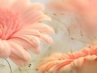 Simples detalhes - FLORAL - Flowers