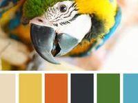 Combos de couleurs