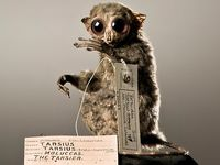 When I win the lottery I will fill a house with odd, unusual, pretty and creepy things. There will be taxidermy, it will not all be good ....
