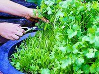 Kitchen & Garden  DIY/ Tips