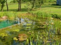Swimming ponds/pools that use a biological filter to clean the water, never any chemicals.  They fit into the landscape and attract lovely creatures such as dragonflies and frogs.