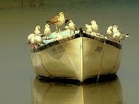 Barcos, barquinhos, barcões/ Boats