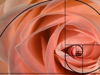 """It's easy as 1, 1, 2, 3.....     Beats """"easy as pi""""  <g> A beautiful mathematical sequence occuring in nature"""
