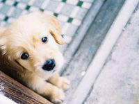 -Puppies, Dogs-