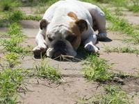 Love bulldogs !!!