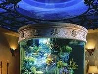 Fishtank on Pinterest Aquascaping, Aga and Fish Tanks