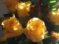 Beautiful flower photographs