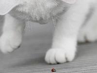 Cats & Kittenz
