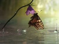 I Love rain and everything it has to offer us ✿◠‿◠✿ Thank you So Much Jehovah God for all your wonderful creations ..