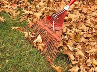 LANDSCAPING-LAWN TIPS