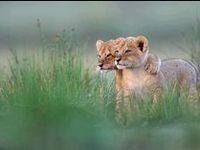 Jungle cats, savannah cats, country, suburban and city cats!