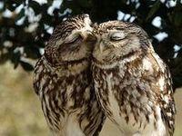 Owls for Mom