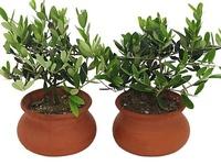 Gardening & Indoor plants...